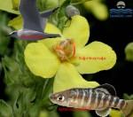 Salda Gölü'ndeki Hayvan ve Bitki Varlığı