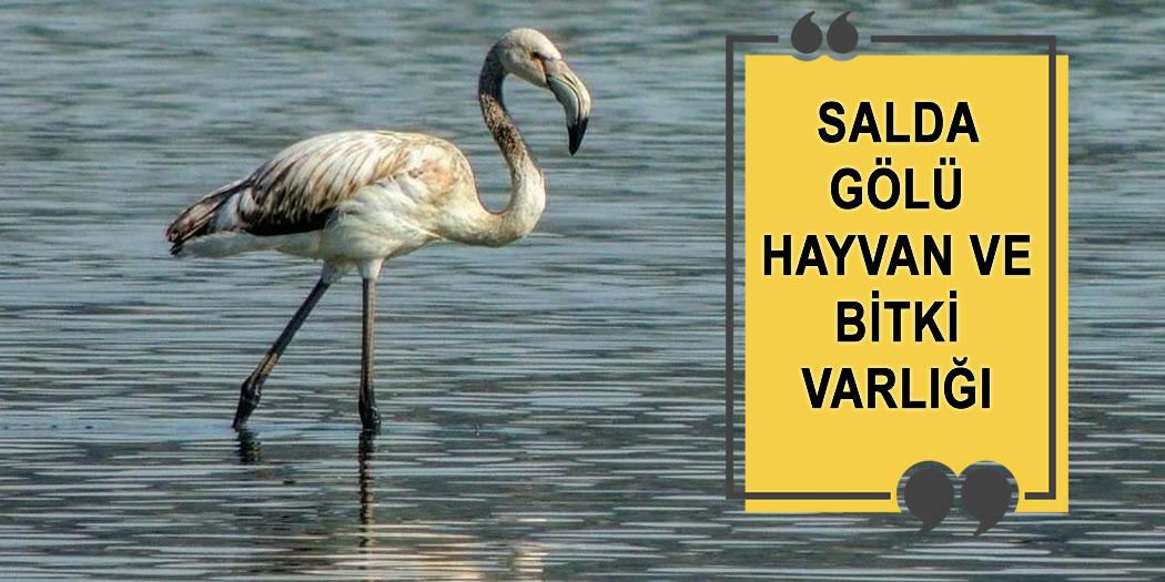 Salda Gölü'nde Yaşayan Hayvan ve Bitkiler